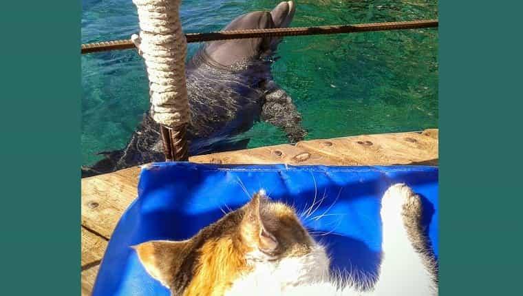 Gato mirando un delfín junto al mar