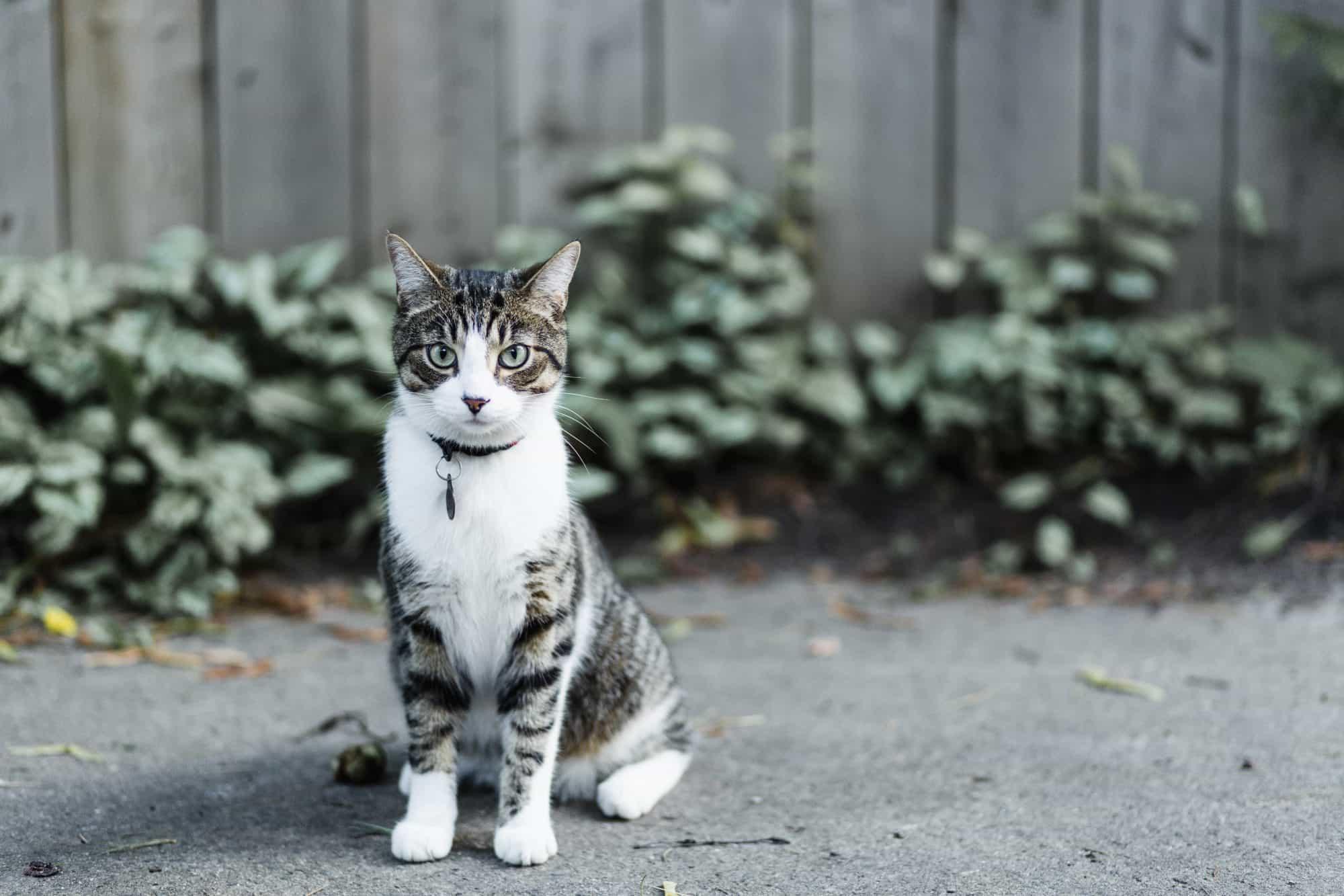 Un gato se sienta afuera.