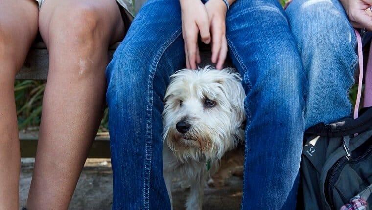 Un perro que parece nervioso se esconde detrás de su dueño para ponerse cómodo mientras mira hacia afuera.
