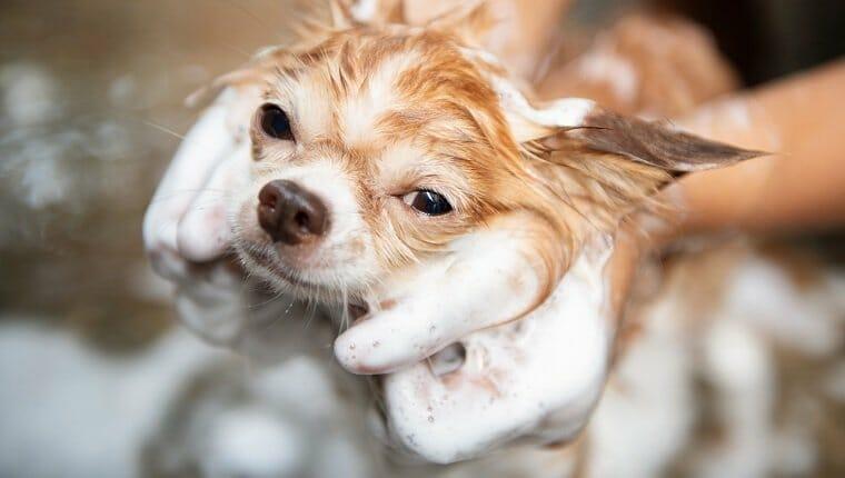 Perro tomando un baño con agua y jabón, servicio de limpieza