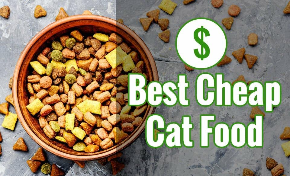 la mejor comida barata para gatos