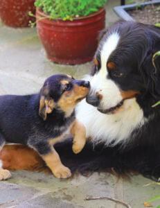 5 consejos para presentar un nuevo cachorro a su perro