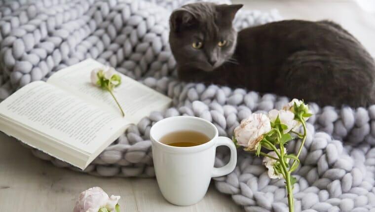 Gatito gris acurrucado en una alfombra de lana gris tejida a mano junto a una taza de té caliente o una infusión de hierbas y rosas en un libro abierto en un concepto de hogar relajante.