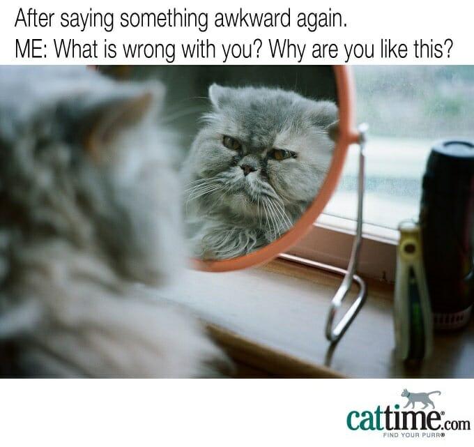 el gato en el espejo