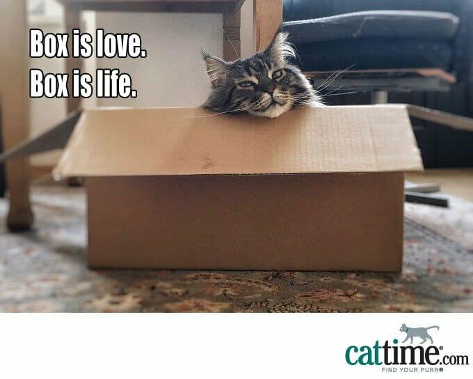 Vida de la caja