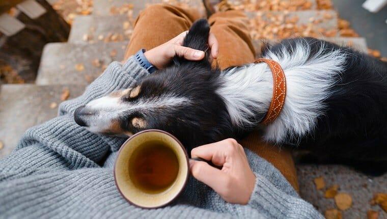 Una persona y un perro sentados en las estrellas con una taza de té.