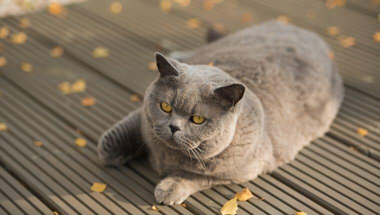 gato en cubierta