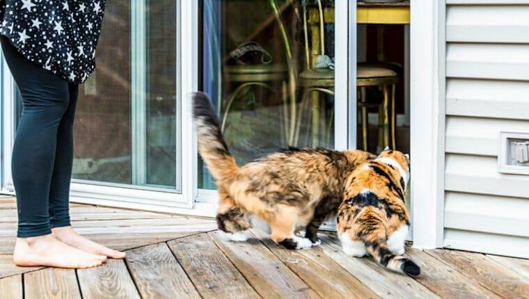 gatos en cubierta