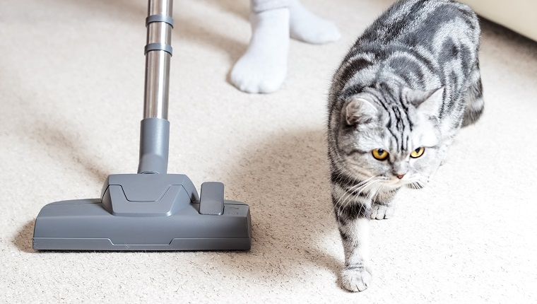 Aspiradora.  Aspiradora de alfombras.  Limpieza.  Pelo de gato.
