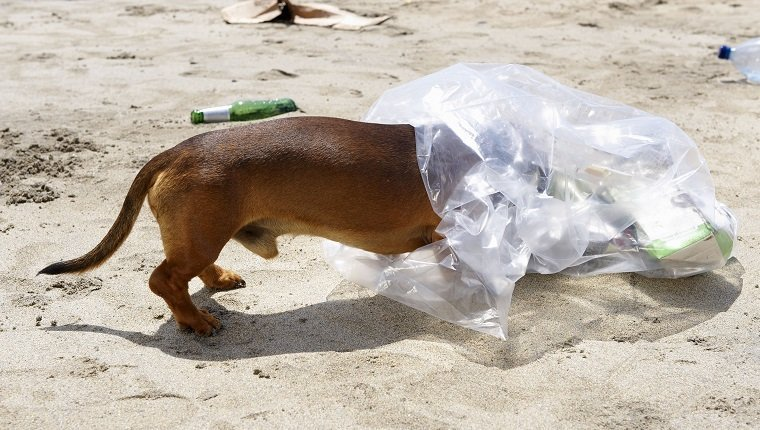 proteger la basura