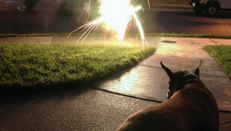 Evite los fuegos artificiales, aerosoles para insectos, barras luminosas y otros productos peligrosos.