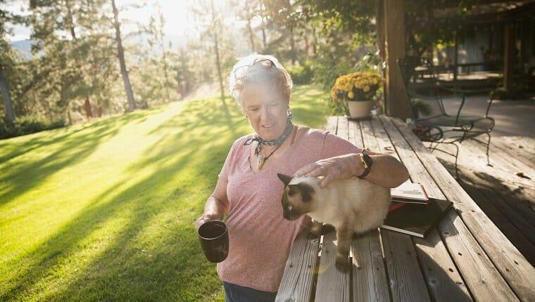 Los gatos pueden quemarse con el sol, así que protégelos
