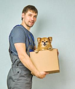 Cómo levantar correctamente a tu perro