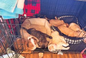 Dormir con tu nuevo cachorro
