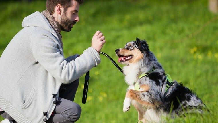 Hombre perro de entrenamiento para sentarse en el parque.