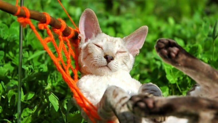 Gato blanco relajándose en una hamaca naranja