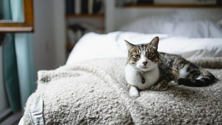 Animal, Dormitorio - Habitación, Dormitorio - Habitación, Gato doméstico, Mascota doméstica