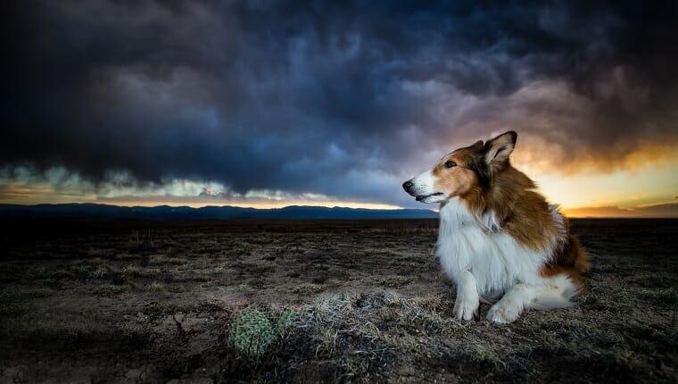 Un collie está sentado en un desierto en el sur de Colorado cuando se acerca una tormenta.