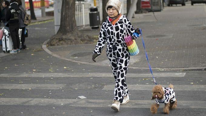 Lleva a tu perro a pasear