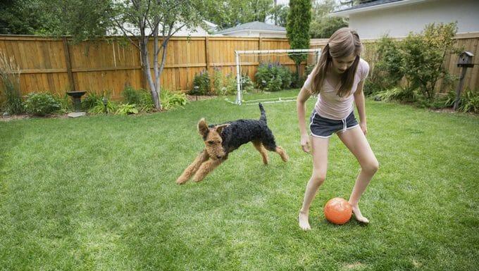 juega con tu cachorro