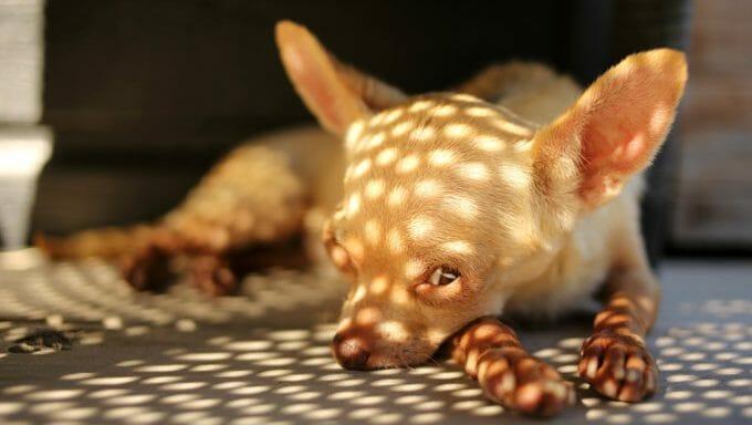 Mantenga a su perro fresco en el calor del verano