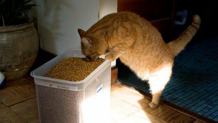 Gato naranja comiendo de un gran cubo de comida para gatos.