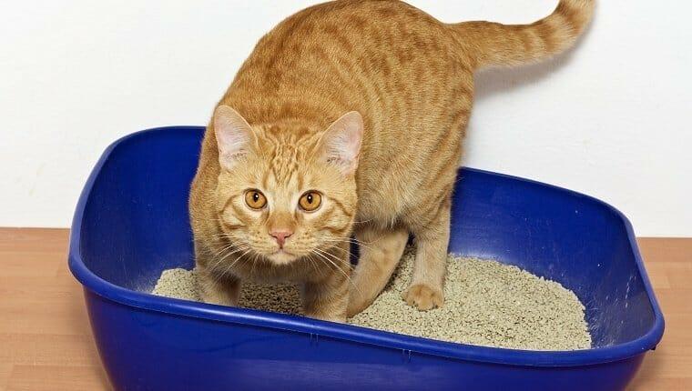 Gatito en arena para gatos de plástico azul