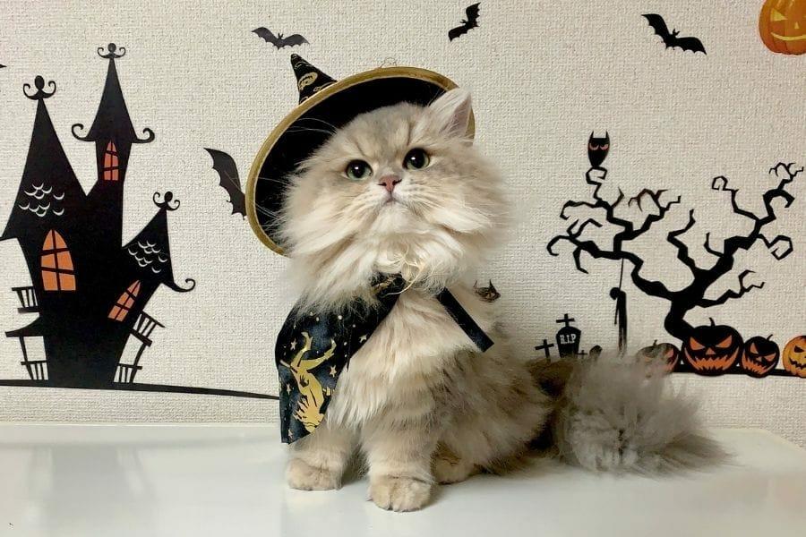 Nombres de gatos de Halloween