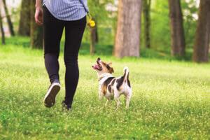 4 enfoques de paseos para perros para agregar placer