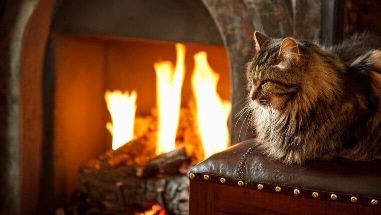 Gato de pelo largo frente al fuego ardiente.  seguridad contra incendios de mascotas