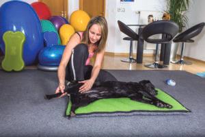 Instrucción de masaje para perros